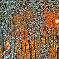 Зима :: Юрий Владимирович 34