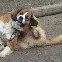 жизнь собачья :: люба пейчева