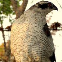 Птичка :: Лилия Гиндулина