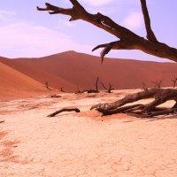 Намибия :: Владимир Ильин