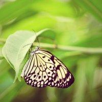 зелень и бабочка :) :: Natalya секрет