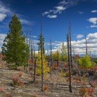 Краски мёртвого леса :: Денис Будьков