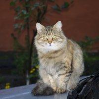 Кошка :: Екатерина Исаенко