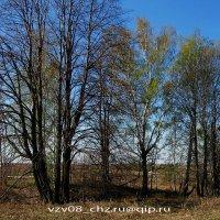 Весна  на  170 километре... :: Игорь Пляскин