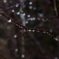 Крымская зима :: Sergey Bagach