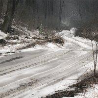 Дорога в лес :: Татьяна
