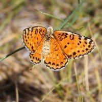 Бабочки на берегу реки Или :: Julia Martinkova