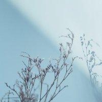 Мороз и Солнце... :: Юлия Тулаева
