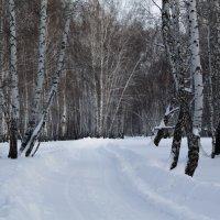 Зимний лес :: Александр Вельц