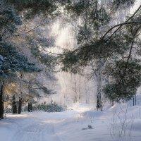 И солнца зимнего лучи :: Елена Потёмина