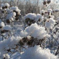зимние цветы :: Татьяна Сухова