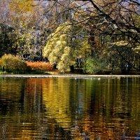 Осень , пруд. :: Viacheslav Birukov