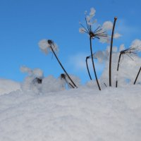 под снегом белым белым :: Marina Dengova