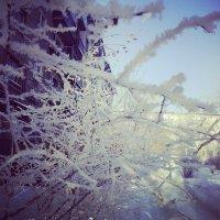 Изморозь :: Андрей Зинченко