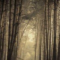 ...в лесу.. :: Галина Юняева