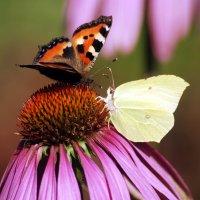 Цветок для двоих :: Лариса Сливина