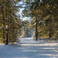 В зимнем лесу. :: Igor Yakovlev