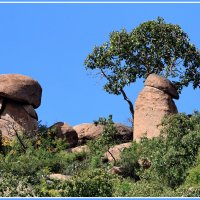 И на камнях растут деревья :: Евгений Печенин
