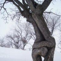 объятия деревьев :: фарид хусаинов