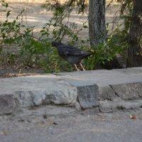 голубь :: фарид хусаинов
