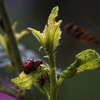 Из жизни насекомых. :: Николай Бабухин