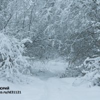 зима :: юрий мотырев