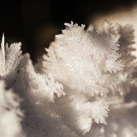 цветы зимы 2 :: Соня Орешковая (Евгения Муравская)