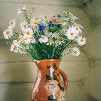 Полевые цветы. :: Михаил Попов