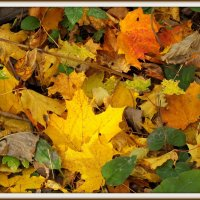 осенняя листва :: Михаил Николаев