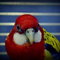Птичка :: Kristinochka S