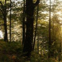 Лес на скале Киселева :: Кристина Воробьева
