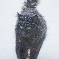 Просто кот :: Владимир Богославцев(ua6hvk)
