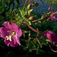 Про цветок у реки... :: Сергей Князь