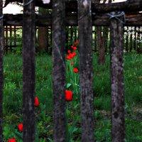 в саду :: Геннадий Свистов