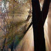 Осенние лучи :: Дмитрий Катин
