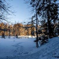 Однажды зимой :: Наталья Rosenwasser