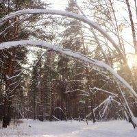 Зимний лес. :: Ольга Кривых