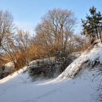 Бегу по чудо-январю, в нехоженном снегу тропиночку торю :: Ирина Данилова