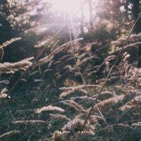 природа :: Анна Руденко