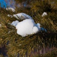 Запах зимы :: Альберт Говоруха