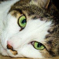 Твои зеленые глаза... :: Вячеслав Чаусов