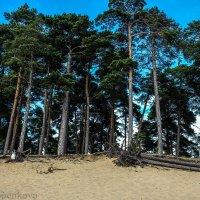 Forest :: Эллина Филиппенкова