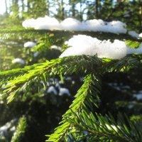 Мороз и солнце, зимний лес.. :: Вячеслав Макаров