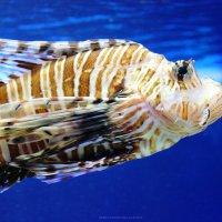 Fish :: Таня Землянухина
