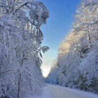 По дорогам питерского Деда Мороза 1 :: Виталий Половинко