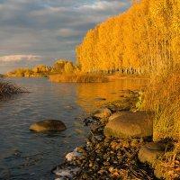 Расплескала осень золотые краски :: Елена Потёмина