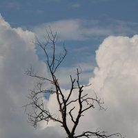 Осень в облаках :: Николай Сапегин
