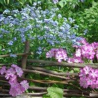 Весна в моём дворе :: Александр Крупский