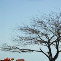 Живое и мёртвое на берегу Мёртвого моря :: Ольга Балихина