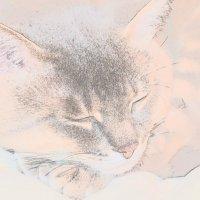 CATS :: Юля